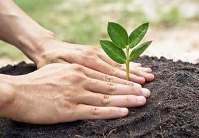 wachsender Baum foto
