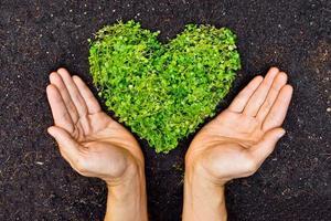 Hände, die ein grünes, belaubtes Herz anzeigen foto