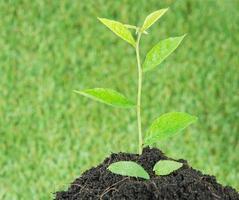 junge kleine neue Leben grüne Pflanze foto