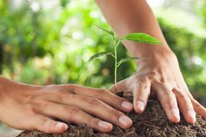 Hände halten und pflegen eine junge Pflanze foto