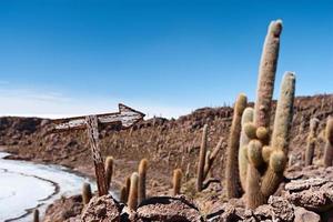 isla del pescado auf salar de uyuni foto