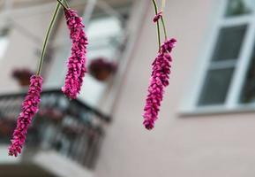 Blumen am Fenster.