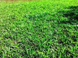 grüner Rasen im Garten schön
