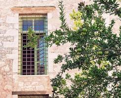 Granatapfelbaum vor dem Fassadengebäude. foto