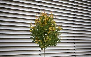 laubbaum im herbst foto