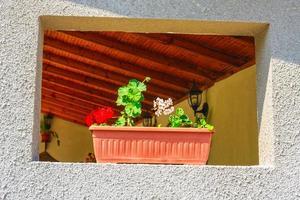 Blumen im Blumentopf an der Wand foto
