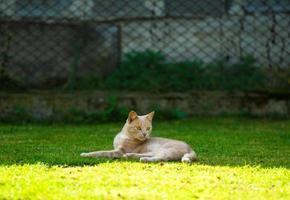 lustige rothaarige Katze