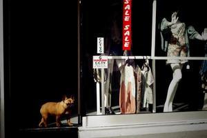 Hund am Ladeneingang foto