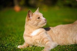 lustige rothaarige Katze foto