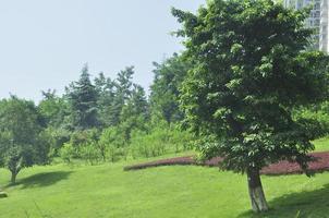 friedlicher Garten foto