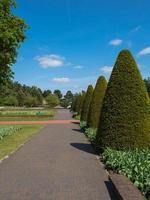 Gasse gesäumt von Buxusbäumen foto