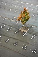 markierter Parkplatz ohne Autos