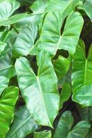 grüne Blätter in der Natur