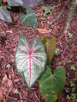 folhas coloridas foto