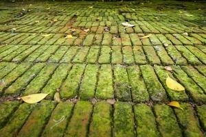 feuchter grüner moosbedeckter Ziegelboden