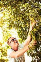 hübscher Mann, der Obst pflückt foto
