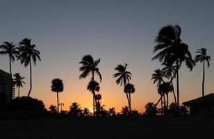 Schattenbild der Palmen bei Sonnenuntergang