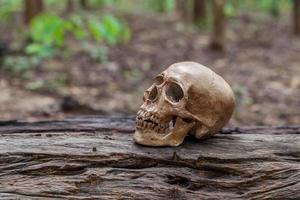 Der Schädel wird auf das Holz gelegt foto
