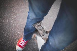 Katze auf den Beinen der Person mit Jeans und Tennisschuhen foto