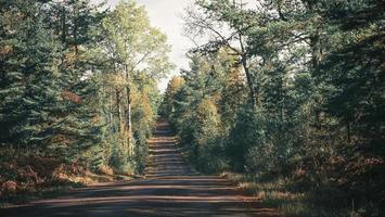 graue Fahrbahn zwischen Bäumen