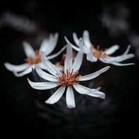 weiße und rote Blume foto