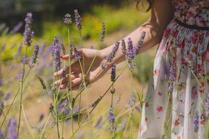 Frau läuft Hand durch Lavendel foto