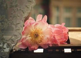 Pastell Pfingstrosenblüten foto