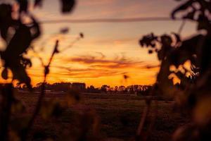 Silhouette der Pflanzen zur goldenen Stunde foto