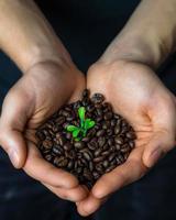 Bündel Kaffeebohnen