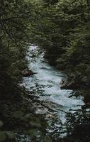 Blick auf den Fluss durch Bäume