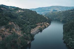 grüne Bäume in der Nähe des Flusses foto