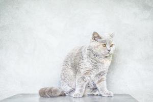 Foto der weißen Katze