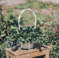 grüne Topfpflanze