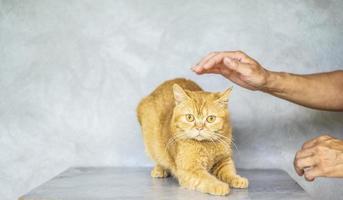 Foto der braunen getigerten Katze