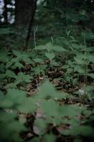grünes Gras unter Bäumen im Wald