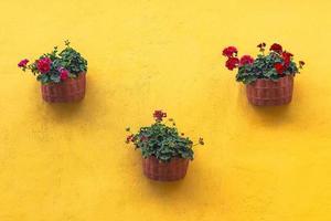 eingetopfte rote Blütenblätter mit grünen Blättern foto