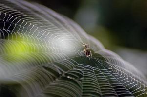 Spinnennetz foto