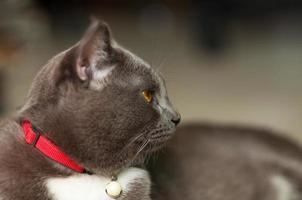 gruselige graue Katze