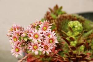 pinke Blumen foto