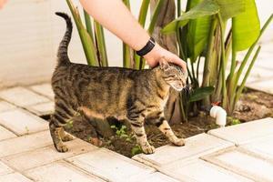 Hand der Person, die Katze streichelt foto