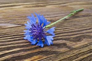 Kornblume auf der Holzoberfläche