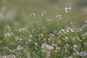 schöner defocus Unschärfehintergrund mit zarten Blumen. foto