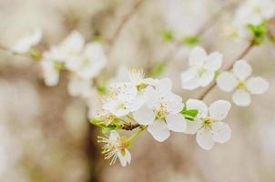 schöne Blumen auf Zweigen von Bäumen im Frühling foto
