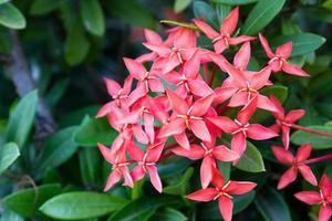 Blumenspitze foto