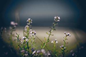 schöner defocus unscharfer hintergrund mit zarten blumen .. retro gr foto