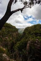 grüner Baum auf Klippe mit Blick auf Tal