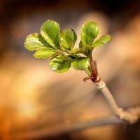 kleine zarte Frühlingsblätter foto