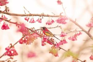 Vogel auf Kirschblüte