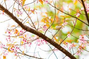 Vogel auf Kirschblüte und Sakura