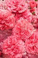 rosa Rosenstraußhintergrund foto